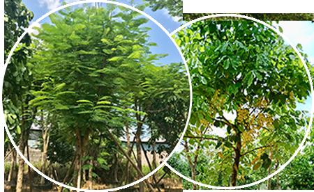 林权评估,苗木评估,森林资源评估