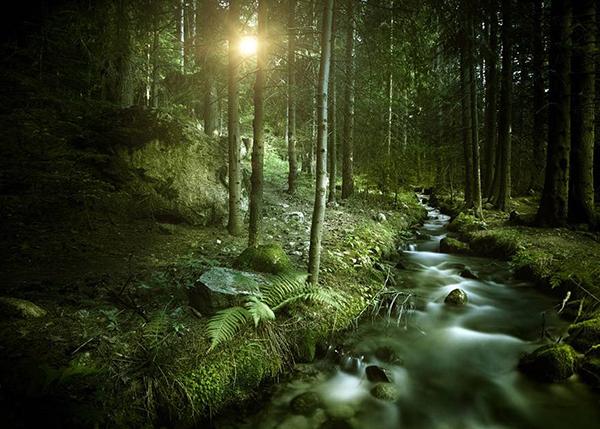 森林景观咨询、评估