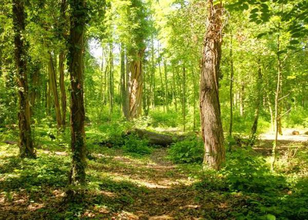 吉林市松花湖实验林场