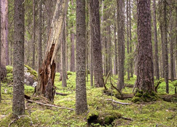森林资产产权问题