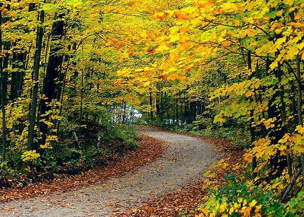 森林景观资产价值评估
