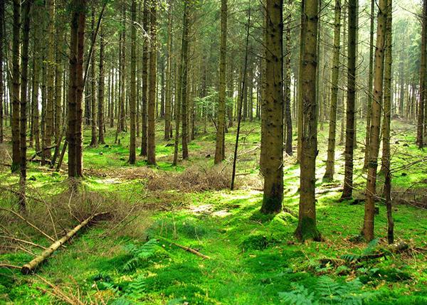 林下经济植物资产问题