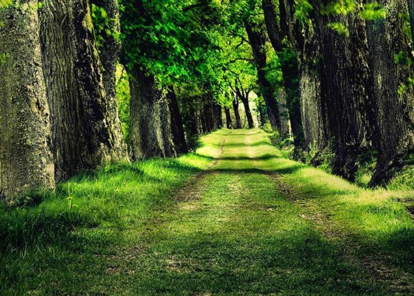 林木蓄积鉴定