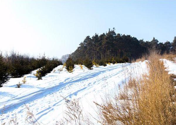 林地面积测量鉴定