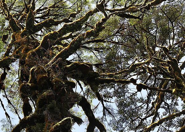 林业建设项目方案编制