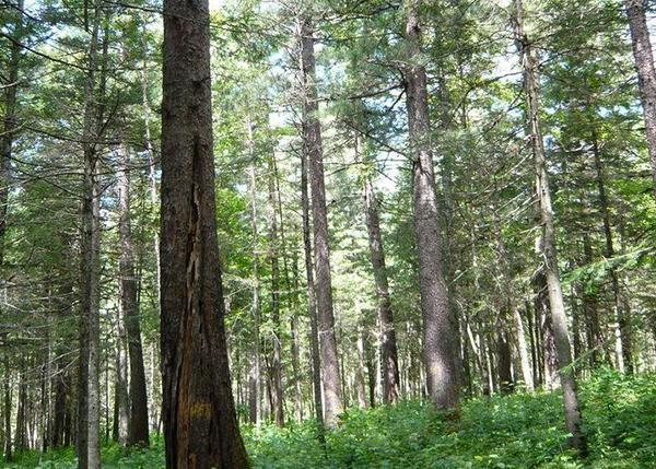 城市园林绿化资产评估(含苗圃、景观、绿地)