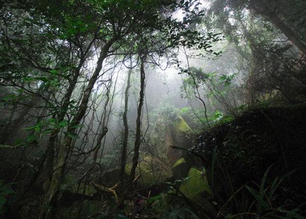 森林公园建设投资咨询
