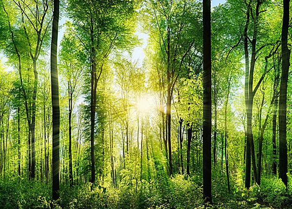 森林保险保额咨询、评估