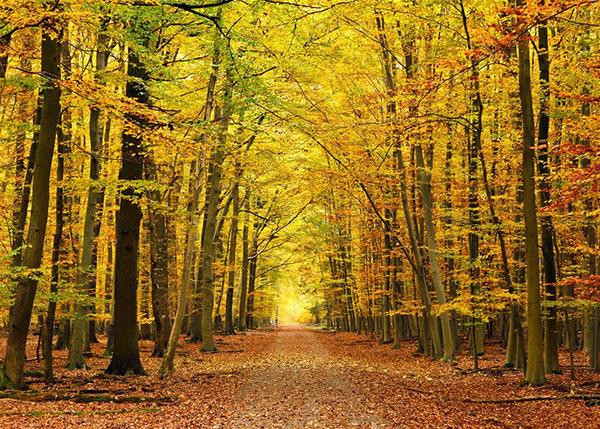 森林生态功能价值咨询、评估