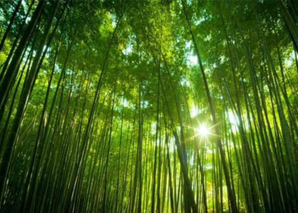 公益林林木、林地价值评估