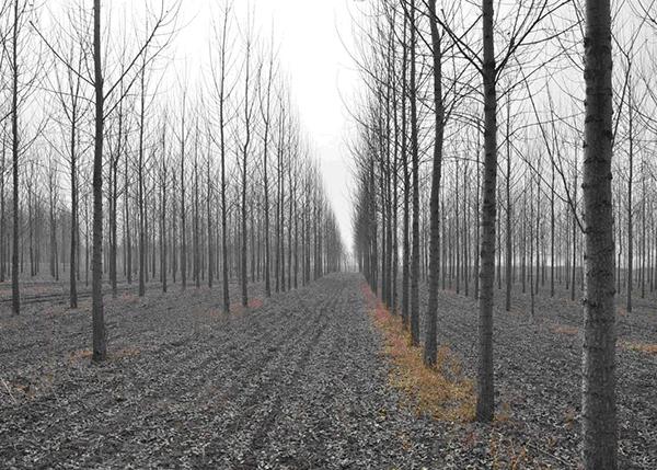 国营新民市机械林场