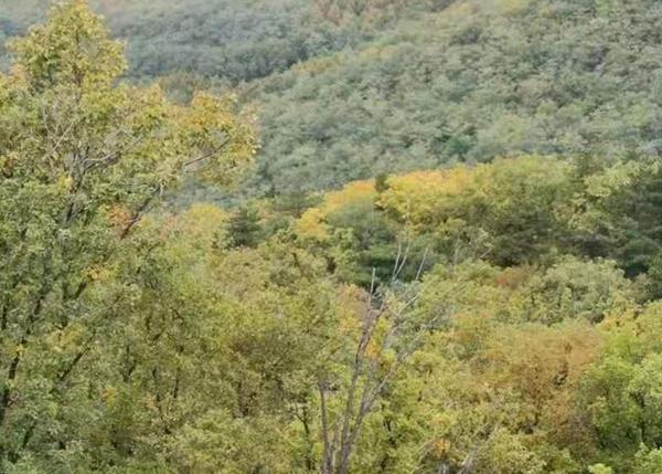 灯塔市花铧子林场