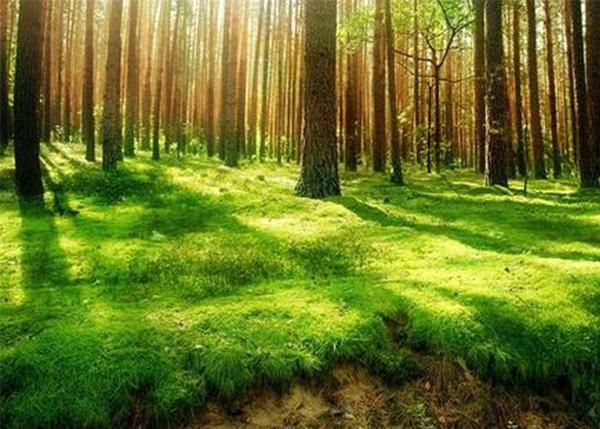 森林资源资产经营问题