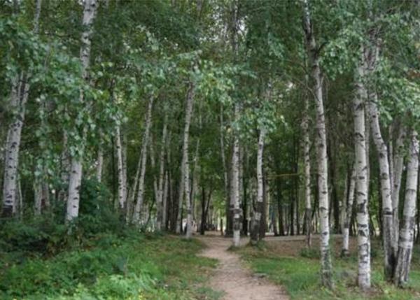 森林资源资产保值