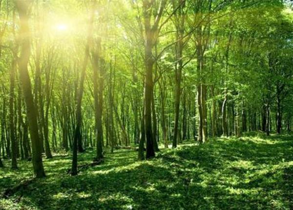 盘锦森林资产界定问题