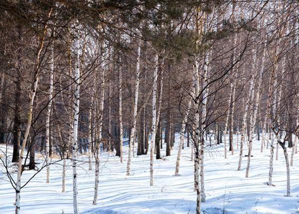 盘锦林木树龄鉴定