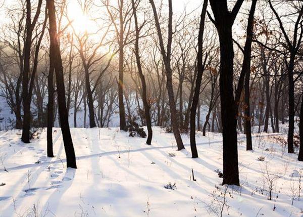 动迁征占林木林地价值评估