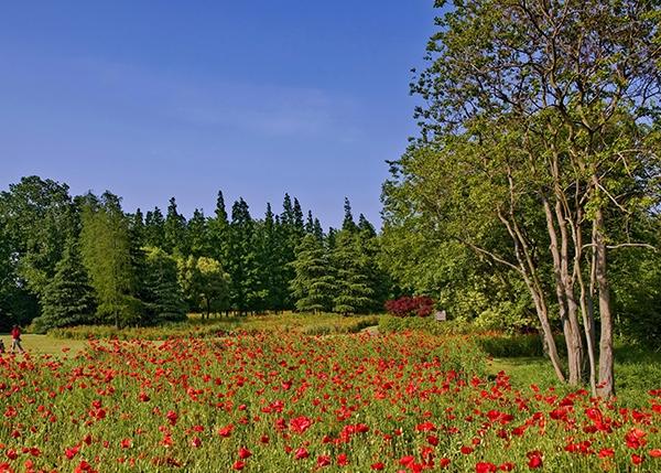 盘锦建设项目使用林地可行性报告纲要
