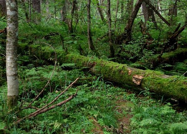 盘锦林业采伐作业设计