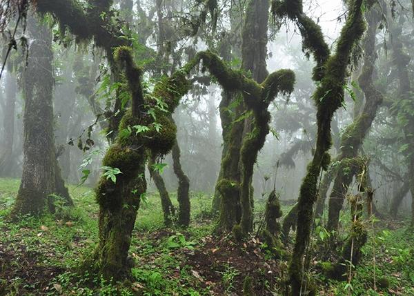 盘锦园林植物价值评估