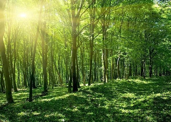 盘锦森林碳储量价值评估